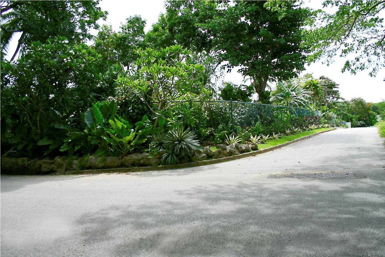 UR Plants 162
